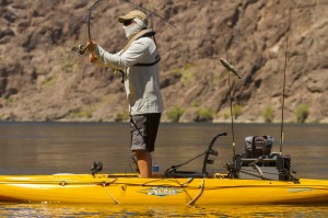 Outback-action-Shane-river-casting-lg_jpg_1600x1600__generated